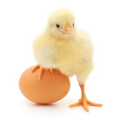 Huhn oder Ei? Nahrungsunverträglichkeit oder Darmprobleme?